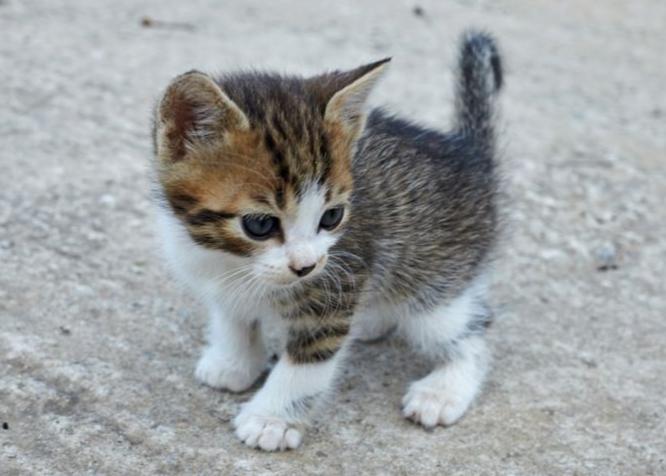 Gyvūnų globa, Pagalba Gyvūnams, Benamiai gyvūnai, katės, kačiukai, šuniukai, Beglobiai gyvūnai www.epanet.lt