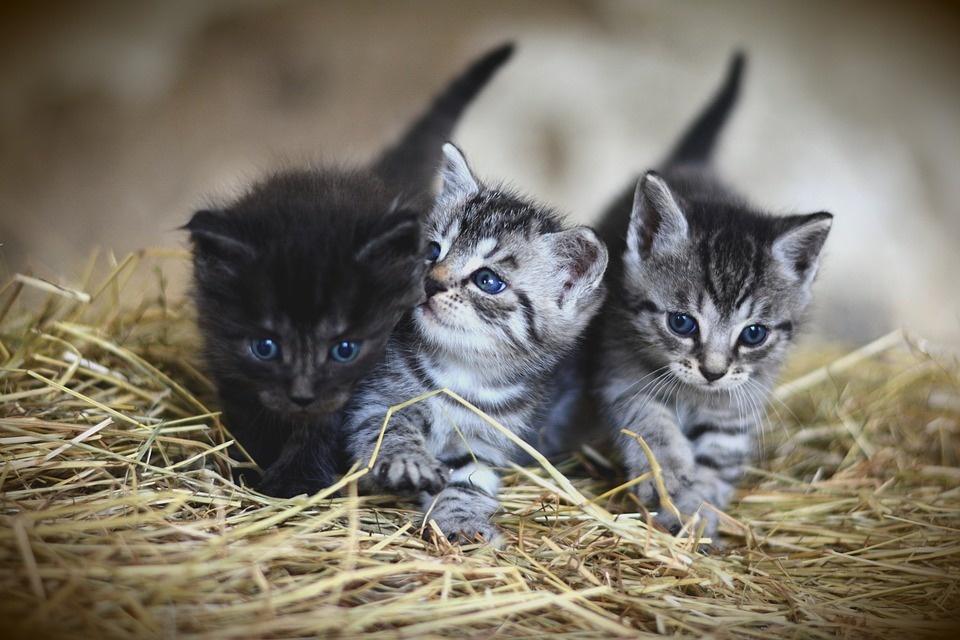 Gyvūnai, Pagalba Gyvūnams, Benamiais gyvūnai, Gyvūnų globa www.eplanet.lt